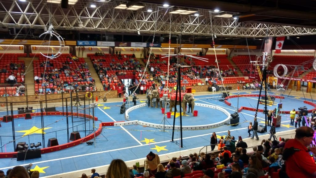 Circus In Three Rings